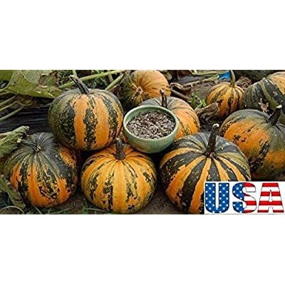 60 Seeds: USA Seller kakai Hull-Less Pumpkin 15, 30, 60, 100 Seeds: Home & Kitchen