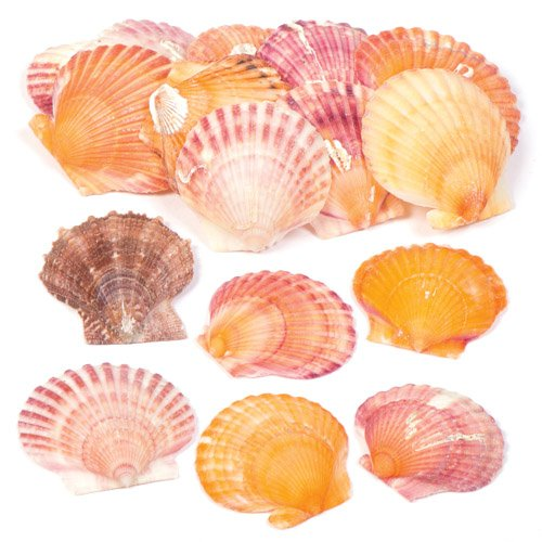 lop Shells Set for Kids and Adults to Embellish Sealife Arts Crafts & Displays - Natural Crafting Supplies (Pack of 250g) ()