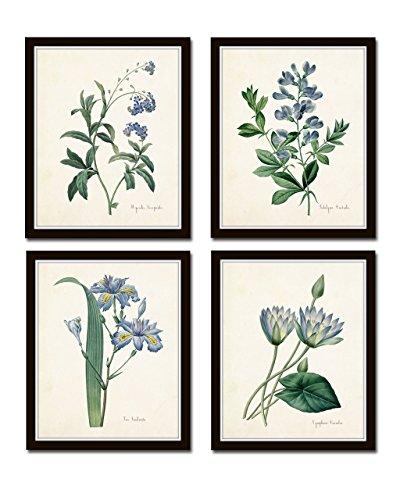 Botanical Print Set No. 20 Giclee Set of 4 Vintage Botanical Prints Home Room Decor Wall Art - Unframed ()