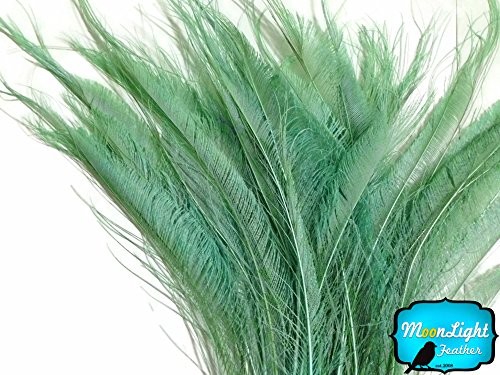 - Peacock Feathers 50 Pieces Aqua Green Bleached Peacock Swords Cut Wholesale Feathers