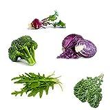 Basic Salad Mix Veggie/Lettuce Seeds,500+Seeds,Mixture Contains: Broccoli, Kale, Kohlrabi, Arugula & Red Acre Cabbage,(Isla's Garden Seeds), Non GMO, 85-90% Germination Rates, Seeds