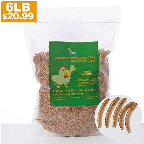 Most Popular Mealworms