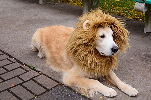 RD Lane Lion Mane Wig Hair Large Dog Costume Halloween Cloth Festival Party Fancy Style Dress up With Ear (Color:Light (Holloween Costume Photos)