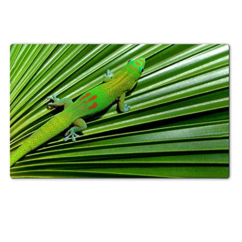 [MSD Natural Rubber Large Table Mat Image ID 24409084 Colorful gecko with blue eyes and webbed feet hides on the pleated surface of a palm frond Big Island Hawaii] (Palm Frond Placemat)