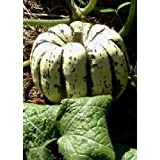 TROPICA - Squash – Sweet Dumpling (Cucurbita maxima) - 15 Seeds - Vegetable specialities