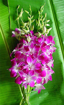 purple dendrobium bombay orchids day special