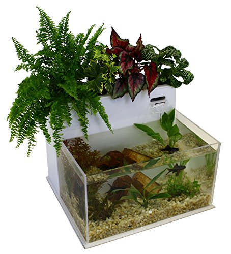 7 Awesome Betta Fish Aquaponics Kits For Your Home Tfcg