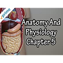 Anatomy And Physiology Chapter 5