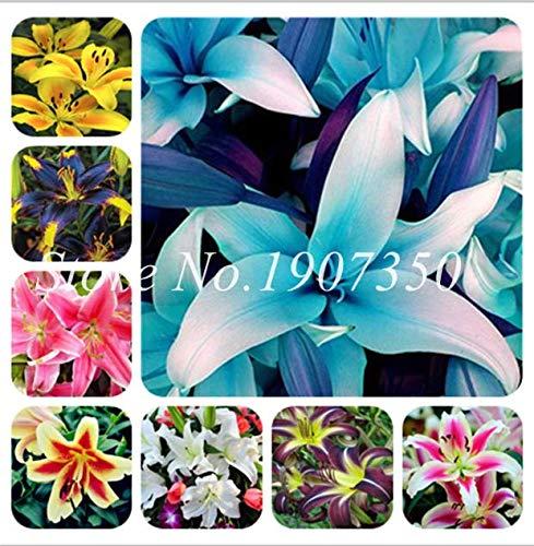 Go Garden 3: 100Pcs Rare Asiatic Lily Bulbs Seeds Planting Lilium Perfume Flower Garden Hot
