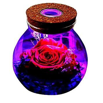 MXIN Conservado Rosa Real Natural Flor Fresca Hecha a Mano ...