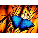 5D DIY Diamond Painting by Number Kits for Adults. Full Drill Crystal Rhinestone Embroidery Cross Stitch Arts Craft for Home Living Room Wall Decor 11.8X15.7 inches Wild Butterfly Nature