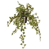 National Tree 12 Inch Garden Accents Green Ivy Plant in Black Pot (GAIP30-12G)