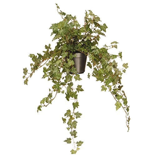 National Tree 12 Inch Garden Accents Green Ivy Plant in Black Pot (GAIP30-12G) by National Tree Company