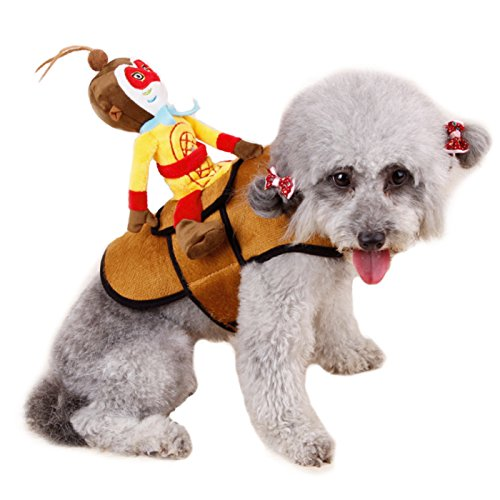 Alfie Pet by Petoga Couture - Dillon the Monkey for Party Halloween Special Events Costume - Size: M (Maltese Halloween Costumes)