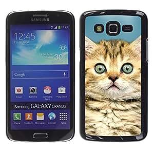 TopCaseStore / la caja del caucho duro de la cubierta de protección de la piel - Kitten Maine Coon House Cat Cute - Samsung Galaxy Grand 2 SM-G7102 SM-G7105