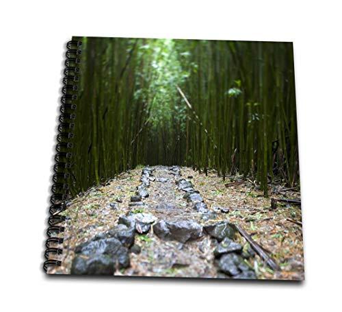 3dRose db_89188_1 Flora, Bamboo Forest, Pipiwai Trail, Haleakala Maui Us10 JGS0019 Jim Goldstein Drawing Book, 8 by 8