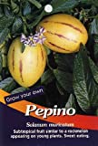 Pepino Melon Pear 10 Seeds-Solanum muricata-Indoors/Out