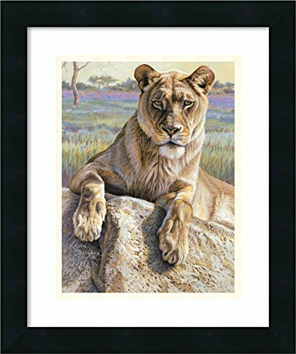 Framed Wall Art Print Serengeti Lioness by Kalon Baughan 15.00 x 18.00 ()