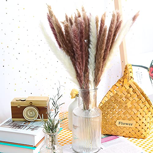 VGOODALL Getrocknetes Pampasgras Deko, 36 Stücke Natürliche Pampasgras Deko in Weiß Braun Echte Trockenblumen Wedel für Inneneinrichtungen Wohnzimmer Hochzeit Deko Blumenarrangements Boho Deko