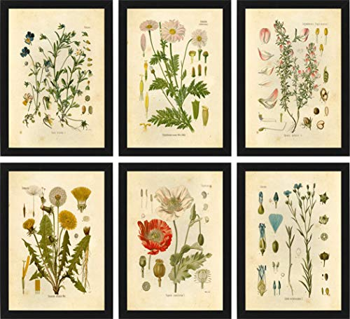 Ink Inc Botanical Prints Wildflower Prints Floral Wall Art - Set of 6-8x10 - Matte - Unframed ()
