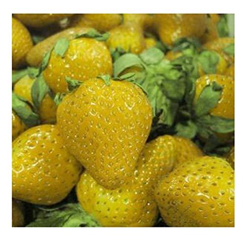 300 Seeds Sweet Yellow Alpine Strawberry Seed Nongmo Organic Fruit #32311445227ST (Alpine Spring)