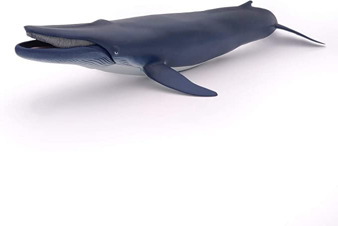 and Oblong Box Whale Play