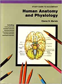 Human Physiology: An Integrated Approach, 8th Edition