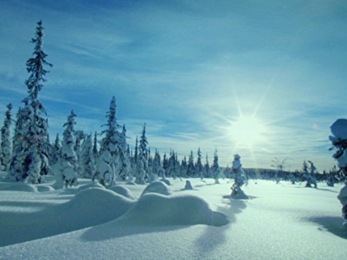 (Taiga: The Frozen Forest)