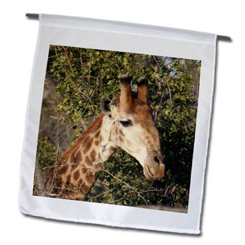 fl_20122_1 Angelique Cajam Safari Giraffes - South African Giraffe headface - Flags - 12 x 18 inch Garden Flag