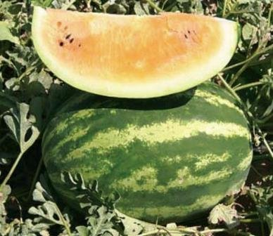 David's Garden Seeds Fruit Watermelon Tendersweet Orange DGS134PIU (Yellow) 25 Organic Seeds