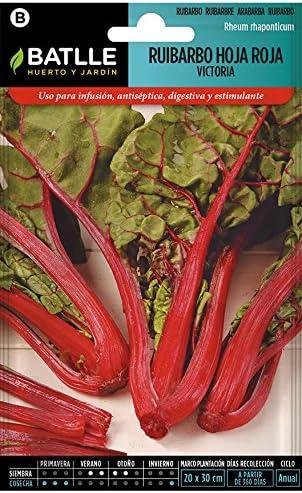 Semillas de Flores - Ruibardo hoja roja Victora - Batlle: Amazon ...