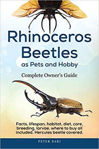 Rhinoceros Beetles As Pets And Hobby Complete Owner S