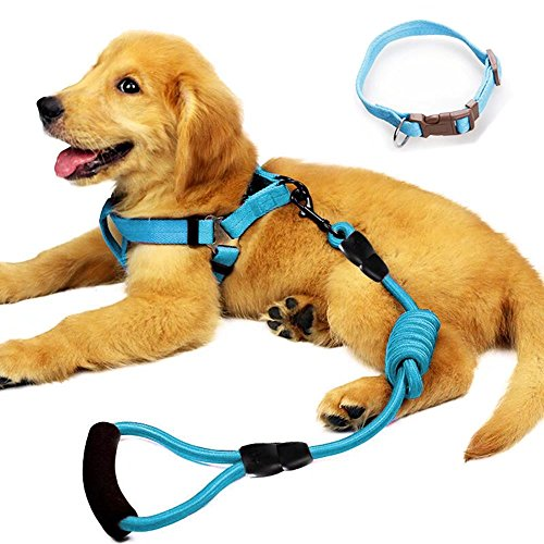 (YUSENPET Dog Leash Harness Set with Collar & Heavy Duty Denim Dog Leash Collar for Small, Medium and Large Dog, Perfect for Dog Daily Training Walking Running)