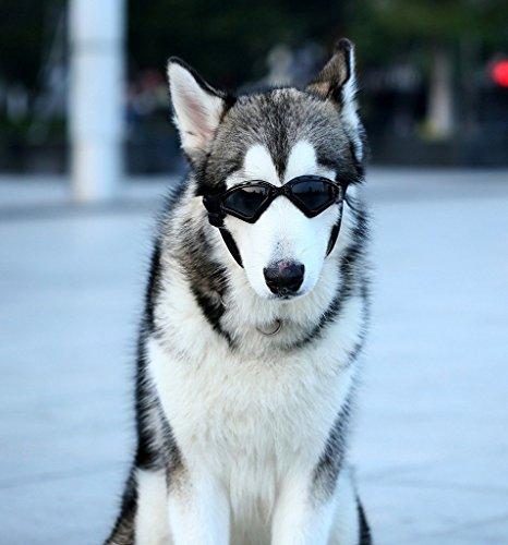 Namsan Hund V-Sonnenbrille UV-Schutz Fashion Eyewear Goggles Gross, Schwarz