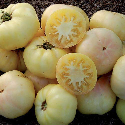 HATCHMATIC 100 Seeds : USA Heirloom Organic Mortgage Lifter Tomato 25-200 Seeds (2 Pounder)