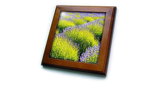 483029f0629a Amazon.com  3dRose Danita Delimont - Flowers - USA