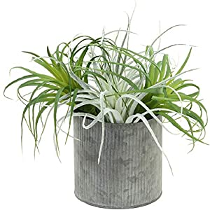 Koyal Wholesale Artificial Air Plants Pack of 4, Assorted Colors Variety, 10-Inch Medium Large Bulk Faux Tillandsia Sprays Succulent Decorations for Glass Terrariums, Hanging Vases, Driftwood, Crystal