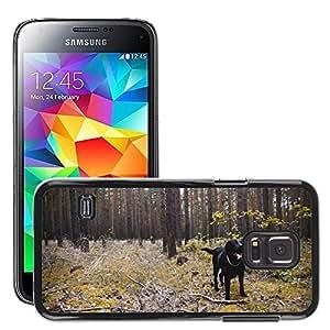 Etui Housse Coque de Protection Cover Rigide pour // M00115354 Perro Labrador Laboratorio Negro // Samsung Galaxy S5 MINI SM-G800