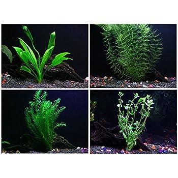 amazon com 15 stems 4 species live aquarium plants package
