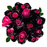 FRESH Tinted Roses| Black and Pink| 25 stems (Asteroid Rose) Magnaflor - XXL Blooms| Bunch| 10-12 days vase Life