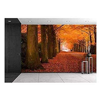 Autumn Colors in The Forest - Wall Murals
