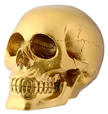 Gold Skull Head Collectible Skeleton Decoration Figurine by StealStreet (Home)