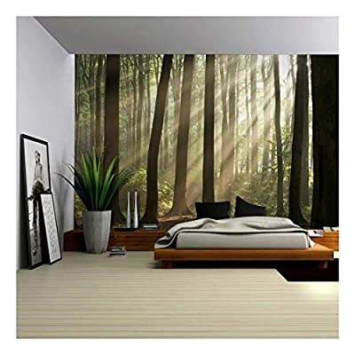 Wall26 - A Landscape Mural of The Sun Peaking Through The Trees in a Forest - Wall Mural, Removable Sticker, Home Decor - 100x144 inches