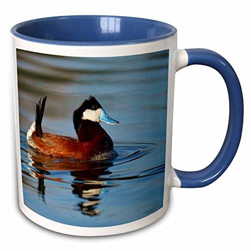 3dRose Danita Delimont - Ducks - Male Ruddy duck, Henderson, Nevada - US29 MPR0067 - Maresa Pryor - 11oz Two-Tone Blue Mug (mug_92248_6) (Ruddy Ducks)