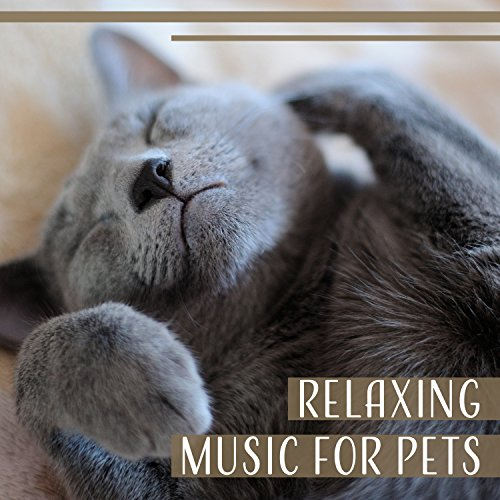 Soothing Music And Sounds For Cats Free To Download