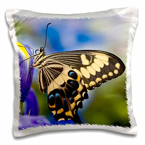 Emperor Iris - 3dRose Danita Delimont - Butterflies - Tropical Butterfly, Emperor Swallowtail - US48 DGU0447 - Darrell Gulin - 16x16 inch Pillow Case (pc_95476_1)