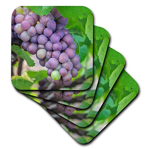 3dRose Danita Delimont - Vineyards - Grapes on vine, Skaneateles, New York, USA. - set of 4 Ceramic Tile Coasters (cst_314957_3)