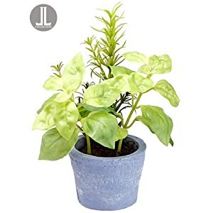 "7.5"" Basil/Rosemary in Clay Pot Green (pack of 12) 8"