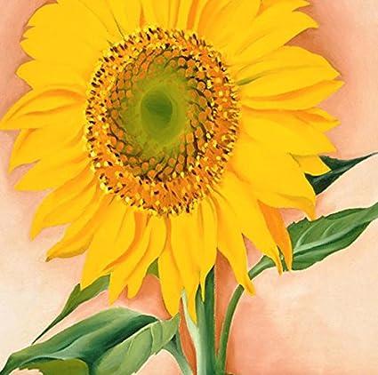 Para mayor de girasol para Maggie 1937 de Georgia O Keeffe 12 x 12 fotografía
