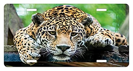 Jungle License Plate By Ambesonne, South American Jaguar Wild Animal  Carnivore Endangered Feline Safari Image